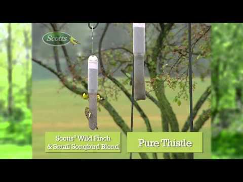 Wild Finch & Small Song Bird Innovation