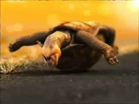 Cool Funny Turtle Commercial - Brahma Beer 2001 (Brazil)