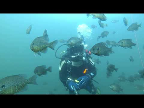 Scuba diving in toronto canada