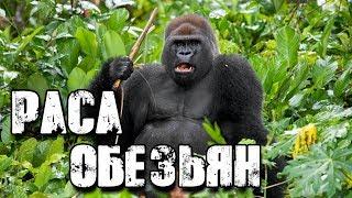 СЕНСАЦИЯ ИЛИ ПРОВОКАЦИЯ - Раса обезьян. Документальные фильмы, детективы