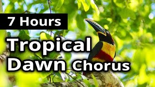 Tropical Bird DAWN CHORUS - Rainforest Morning 7 hours - Relaxation, Background, Meditation