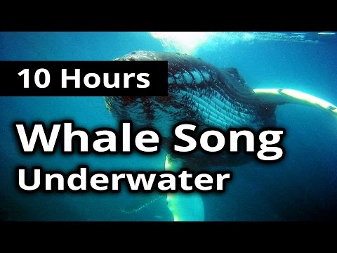 SOUNDS of WHALE SONG for 10 Hours - For Meditation, Concentration, Relaxation and Sleep.