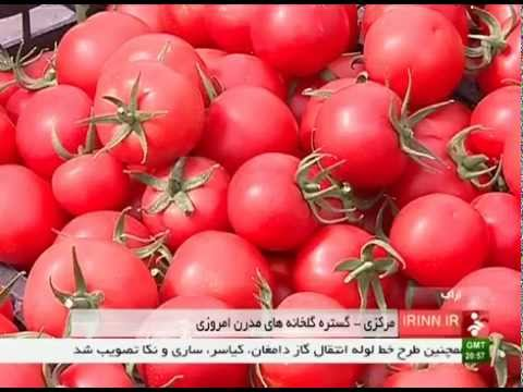 Iran Markazi province, Greenhouse agriculture products محصولات كشاورزي گلخانه اي استان مركزي ايران