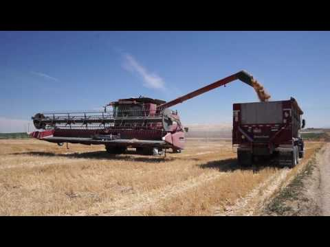 Trinity Trailer - Grain Harvest