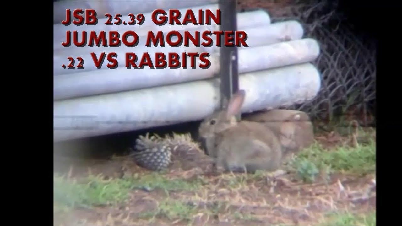 JSB Jumbo Monster Vs Rabbits Daystate Hunstman XL .22 40 ft lbs
