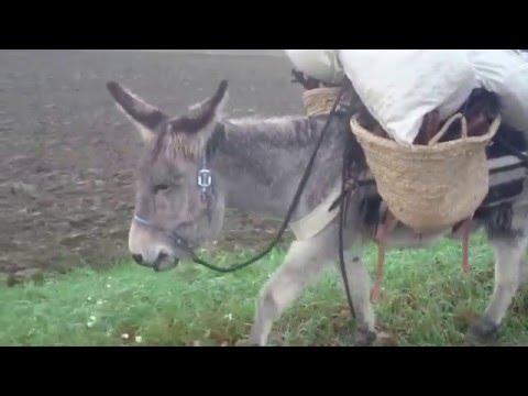 chargement de bois avec mon ânes moustache