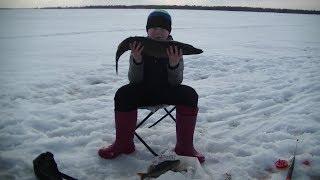 Рыбалка с сыном с ночёвкой.