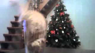 Жидкий кот и ваза/ Cat & vase, liquid cat