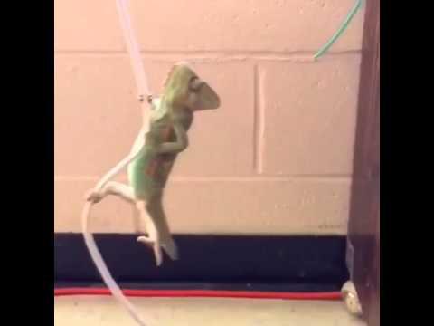 Kameleon wrecking ball
