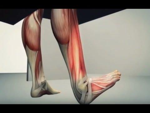 Болят ноги от колена до стопы
