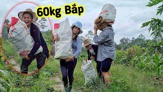 Giúp Bà Ngoại Hái Bắp Đem Ra Chợ Bán, Duy Nan Và Mẹ Vợ Vác 60kg Bắp Chạy Dưới Mưa | Duy Nan #68