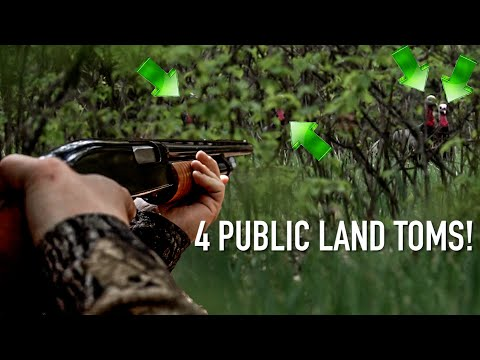 Spring Turkey Hunting Wisconsin - REAL OWL AND HEN AUDIO!