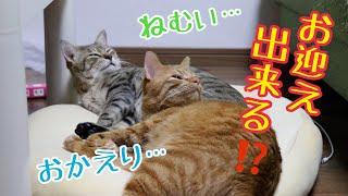 猫達は寝起きでもメス主をお出迎えできるのか!?