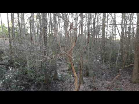 South Alabama swamp