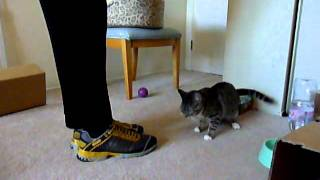 Amazing Cat Tricks Performed by Missy