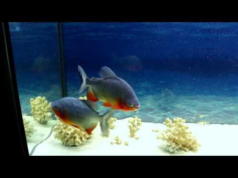 Купил аквариум на 450 литров Мой аквариум запустил рыбок