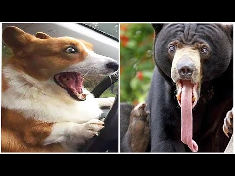 TOP Funny Animals Vines 2020 ? Cute and Funny Animal Videos Compilation ? Try not to laugh Cafa Land