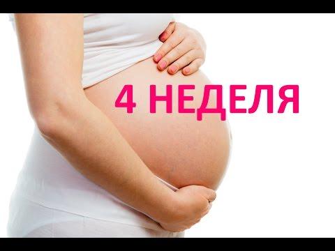 4 четвертая неделя беременности