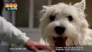 """Ветеринарная Клиника   """"ZOO Life"""""""