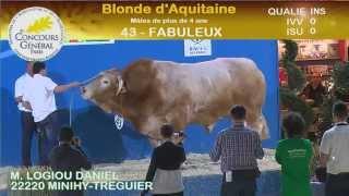 Concours de la race Blonde d'Aquitaine (3/4)