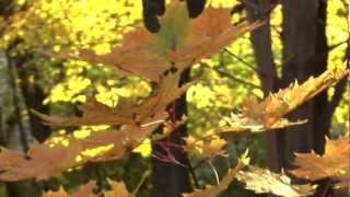 Relax Video Lost Autumn Природа Осени