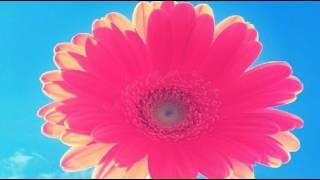 欅坂46『制服と太陽』アカペラ歌ってみた