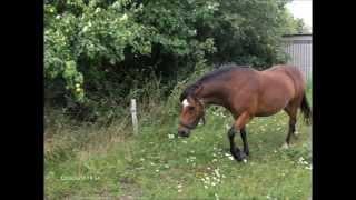 Mig og min pony (mig og Mama mia - Erik Clausen )