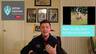Baby Giraffes, Passholder Perks and a New IllumiNations Dining Package | WDW Opinion Live 1.15.19