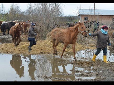 Hatvan lovat szállítottak el egy pankaszi telepről az állatvédők