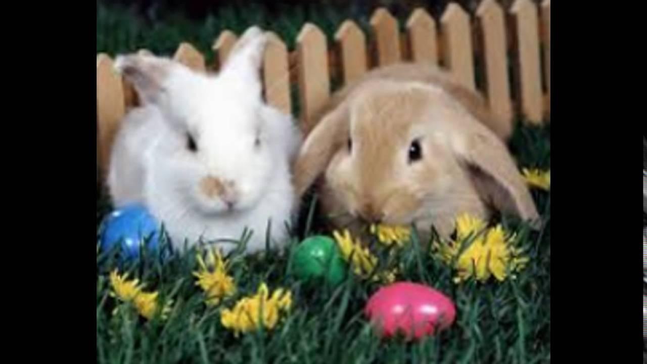 Sevimli Tavşan Resimleri Youtube