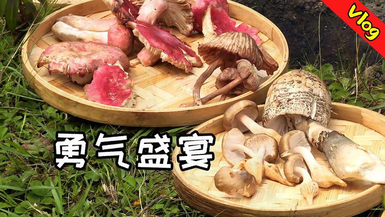 入院套餐:云南野生菌,真香