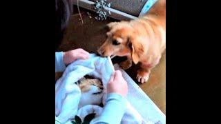친구의 죽음을 직감한 강아지는, 친구를 감싼 담요를 입에 물더니..