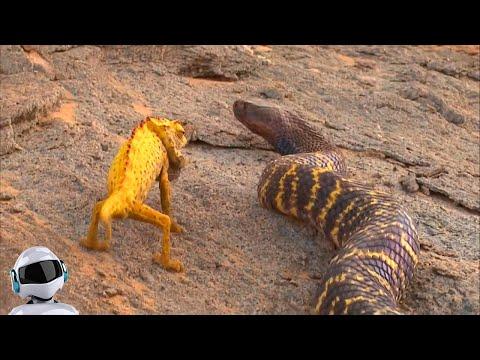 Вопрос: Почему гадюки единственные из змей способные жить за Полярным кругом?