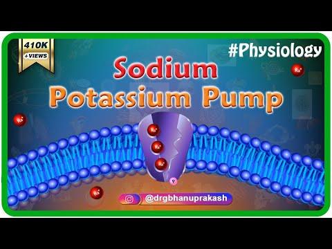 SODIUM - POTASSIUM PUMP ANIMATED LECTURE