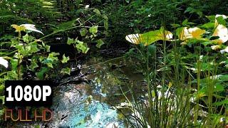 Лесной ручей, ручей в лесу, звуки природы, природа, пение птиц, птицы поют, звук, шум, гул, ручья, в