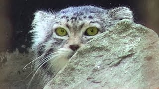 Ostrava - Zoo, Czech Republic (Česká republika) [HD] (videoturysta)