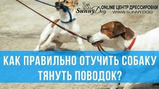 Как правильно отучить собаку тянуть поводок? Что делать, если собака вырывает поводок на прогулке?