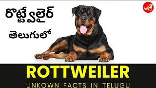 Rottweiler Dog Facts తెలుగులో