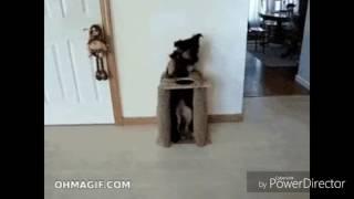 Собака стала человеком