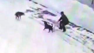Заправщик убил бездомную собаку 18+