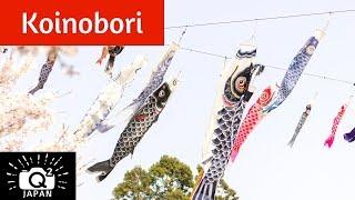 Tokunaga Koinobori in Okayama, Japan 徳永鯉のぼり
