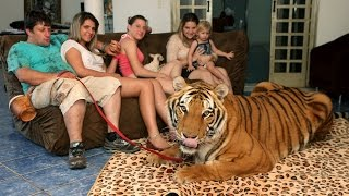 Repeat youtube video Living With Tigers: Family Share Home With Pet Tigers