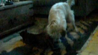 My doggie licks my pussy My Dog Licking My Pussy Youtube