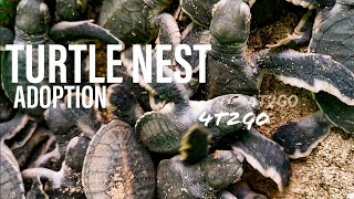 Sabah Travel EP5: Turtle Nest Adoption Program and 88 SimSim Seafood Restaurant, Sandakan!