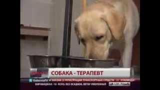 Собака-терапевт. Новости. GuberniaTV