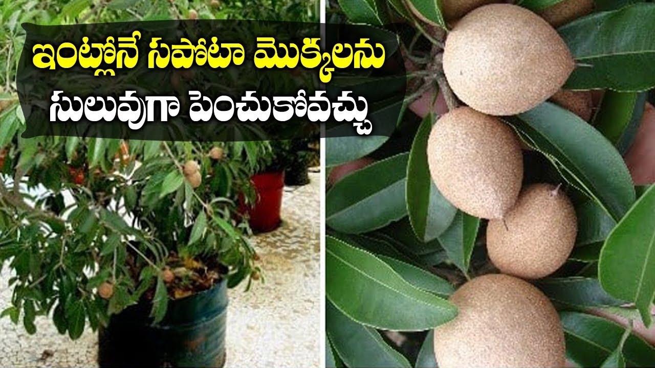 Telugu Organic Gardening