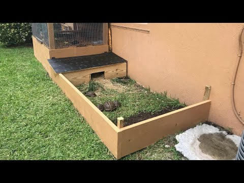 How to make an Outdoor Tortoise Enclosure