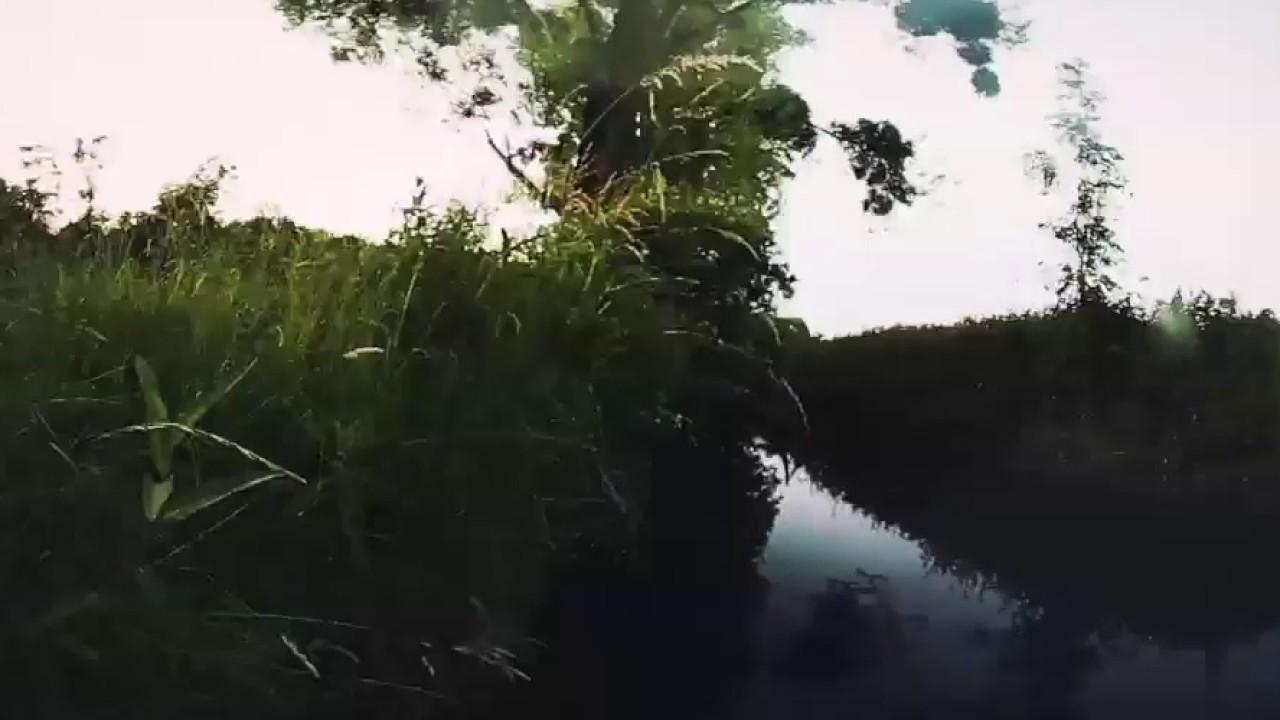 Vögeln Im Wald