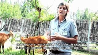 Conservación de especies amenazadas