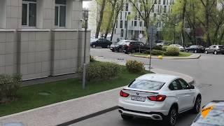 Природа настолько очистилась? Заяц-русак был замечен в центре Минска!